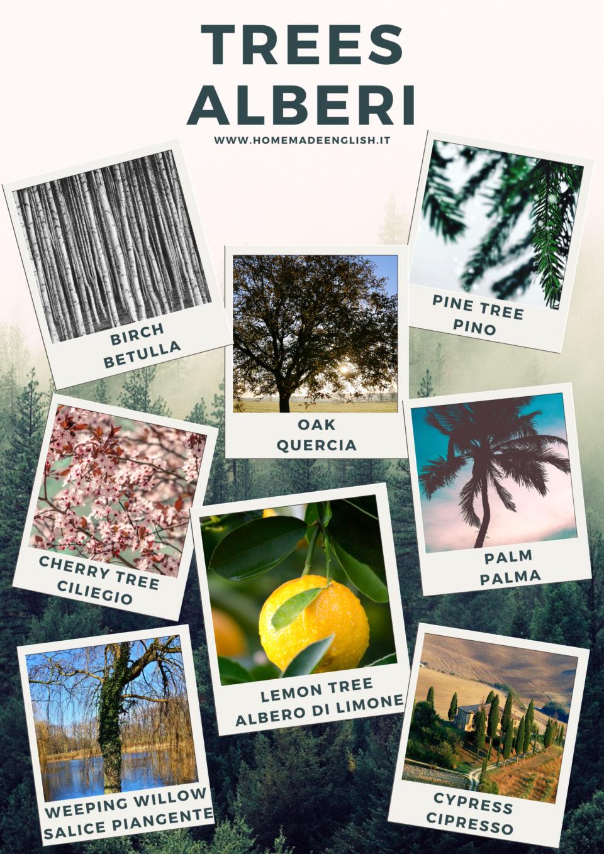 Tipi di albero